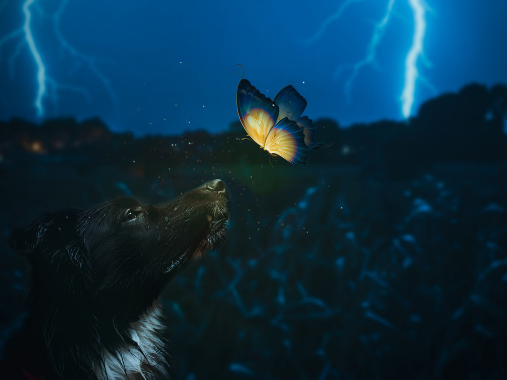 dog-and-butterfly-dy.jpg