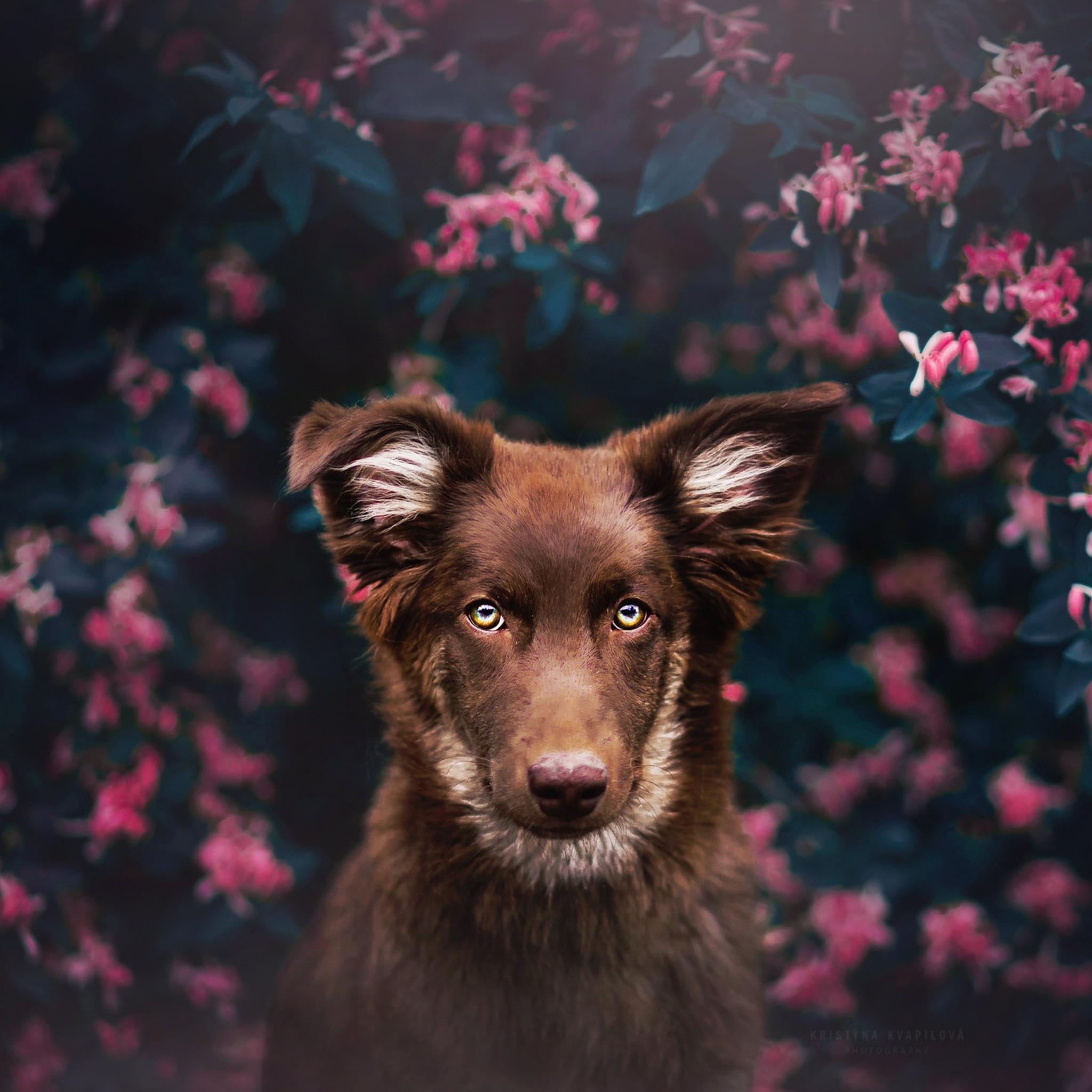 dog-attractive-eyes-kk.jpg