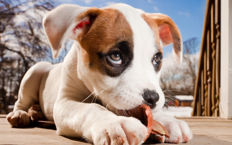 2880x1800 Dog Cute Macbook Pro Retina Hd 4k Wallpapers Images