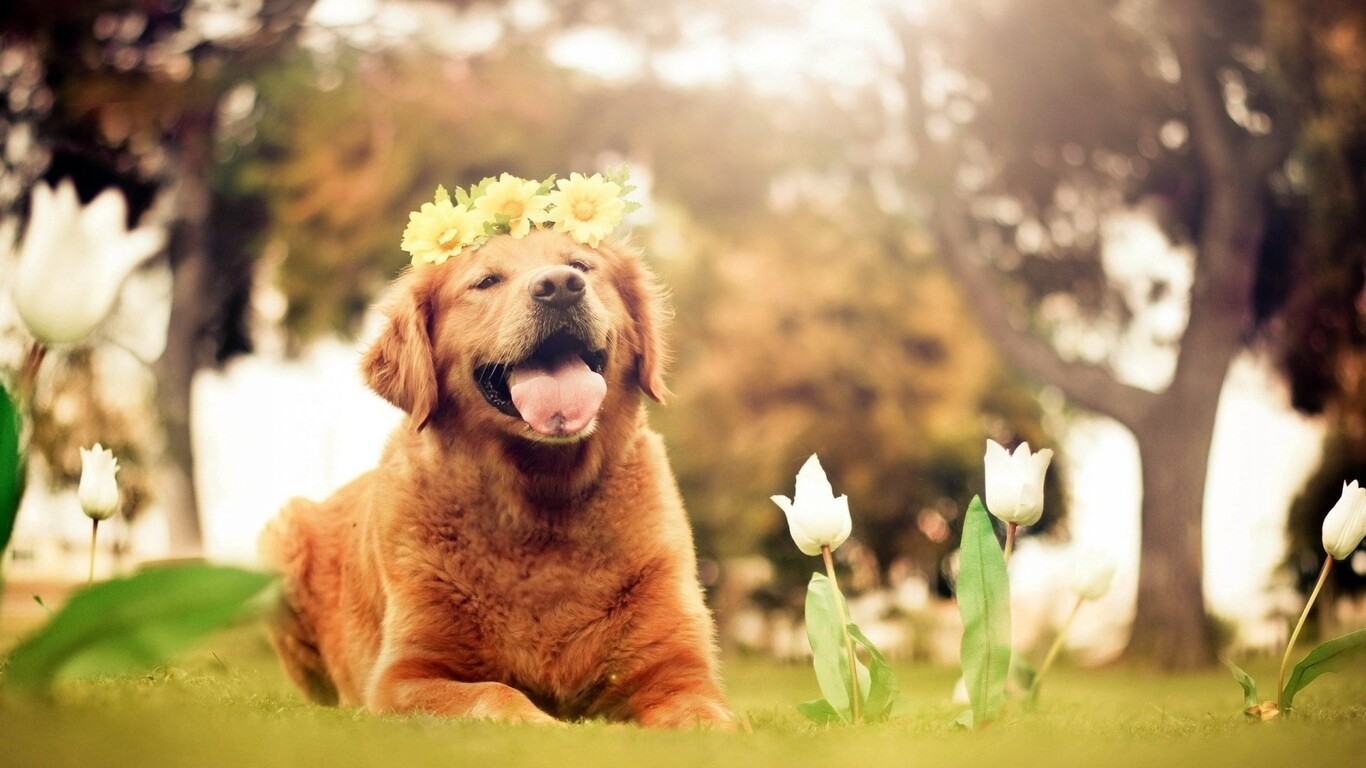 dog-flowers-smiling-wallpaper.jpg