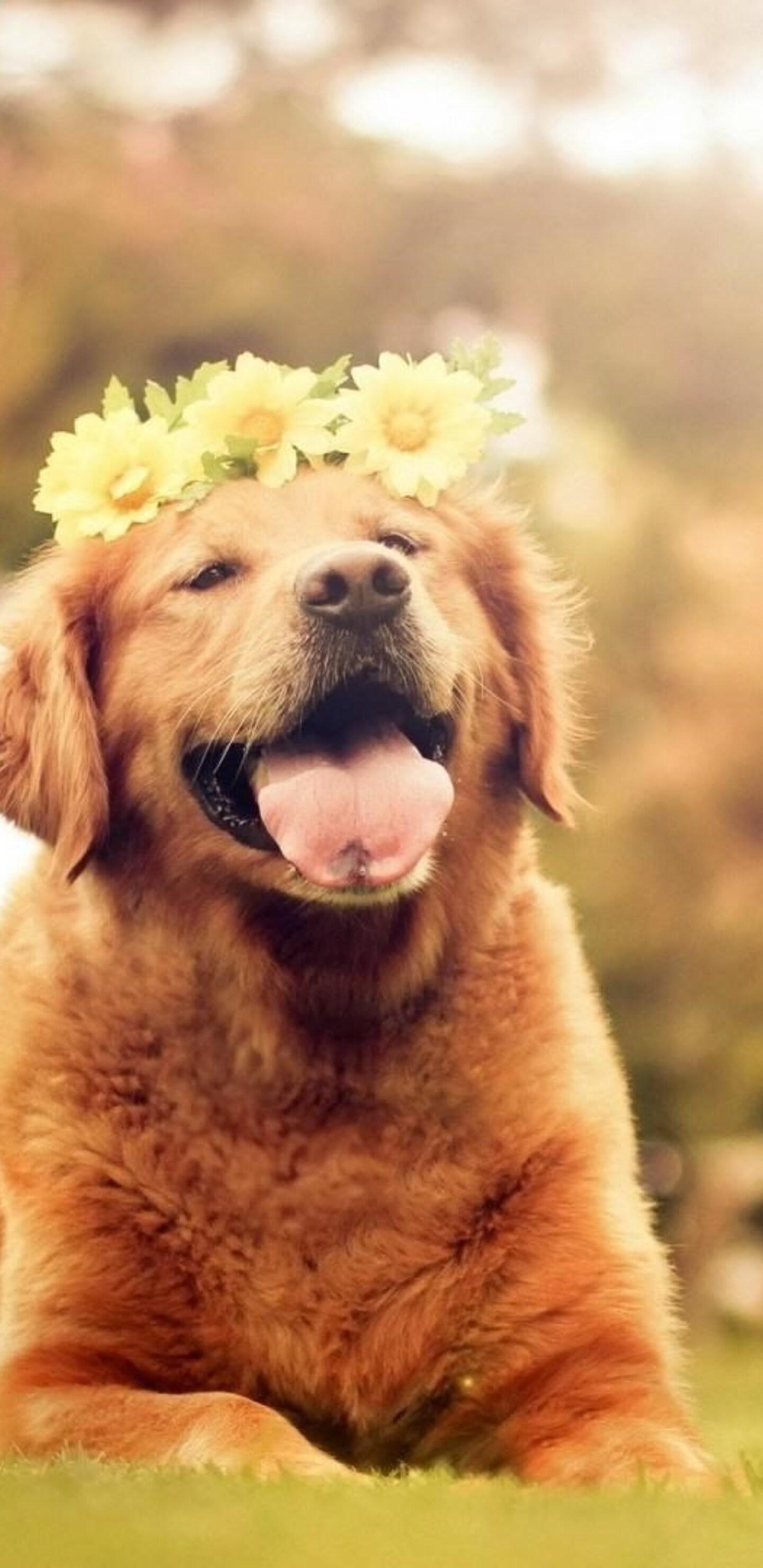 dog flowers smiling wallpaper