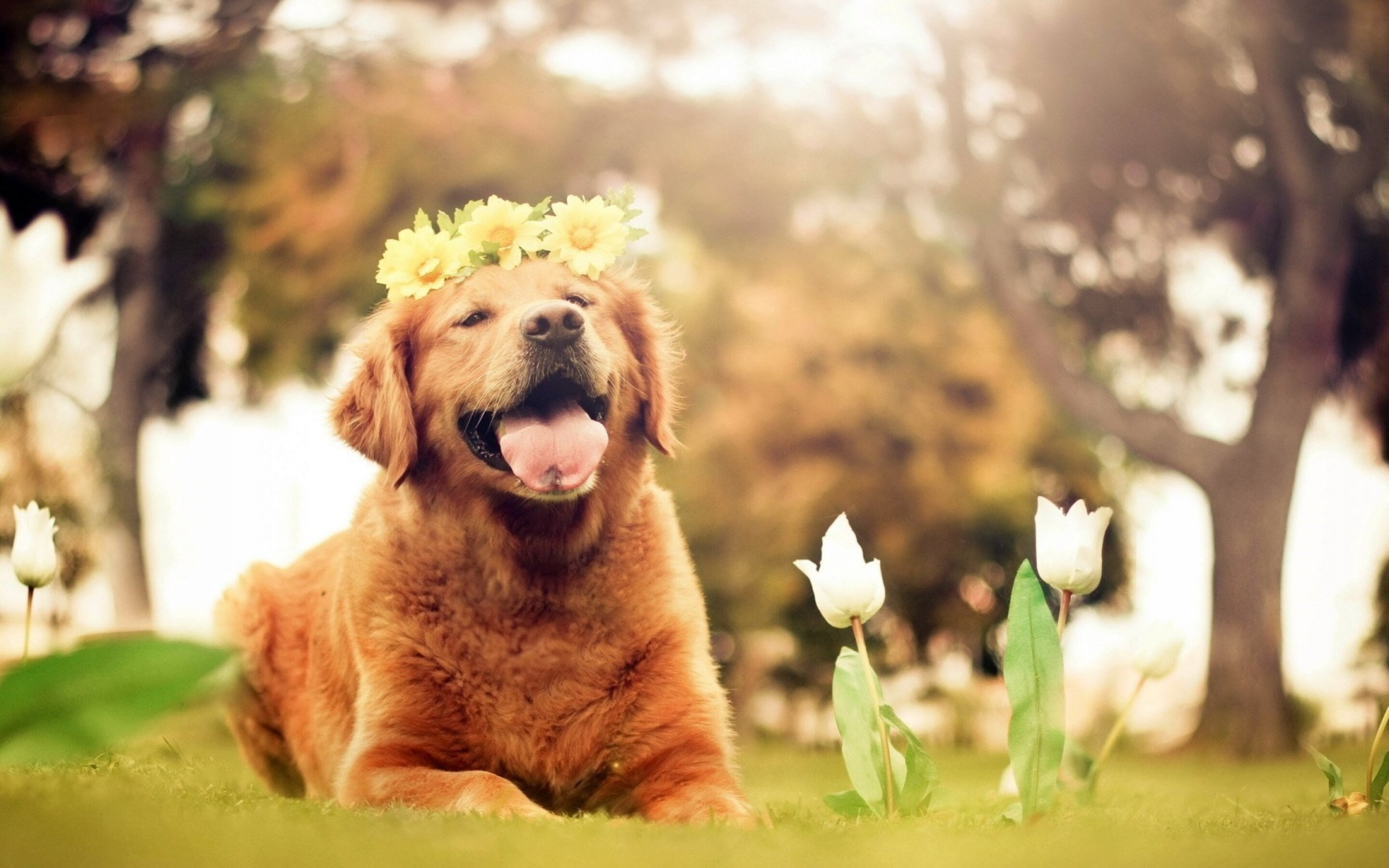 Best Wallpaper Macbook Dog - dog-flowers-smiling-wallpaper-2880x1800  You Should Have_994170.jpg