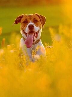 dog-in-fields.jpg