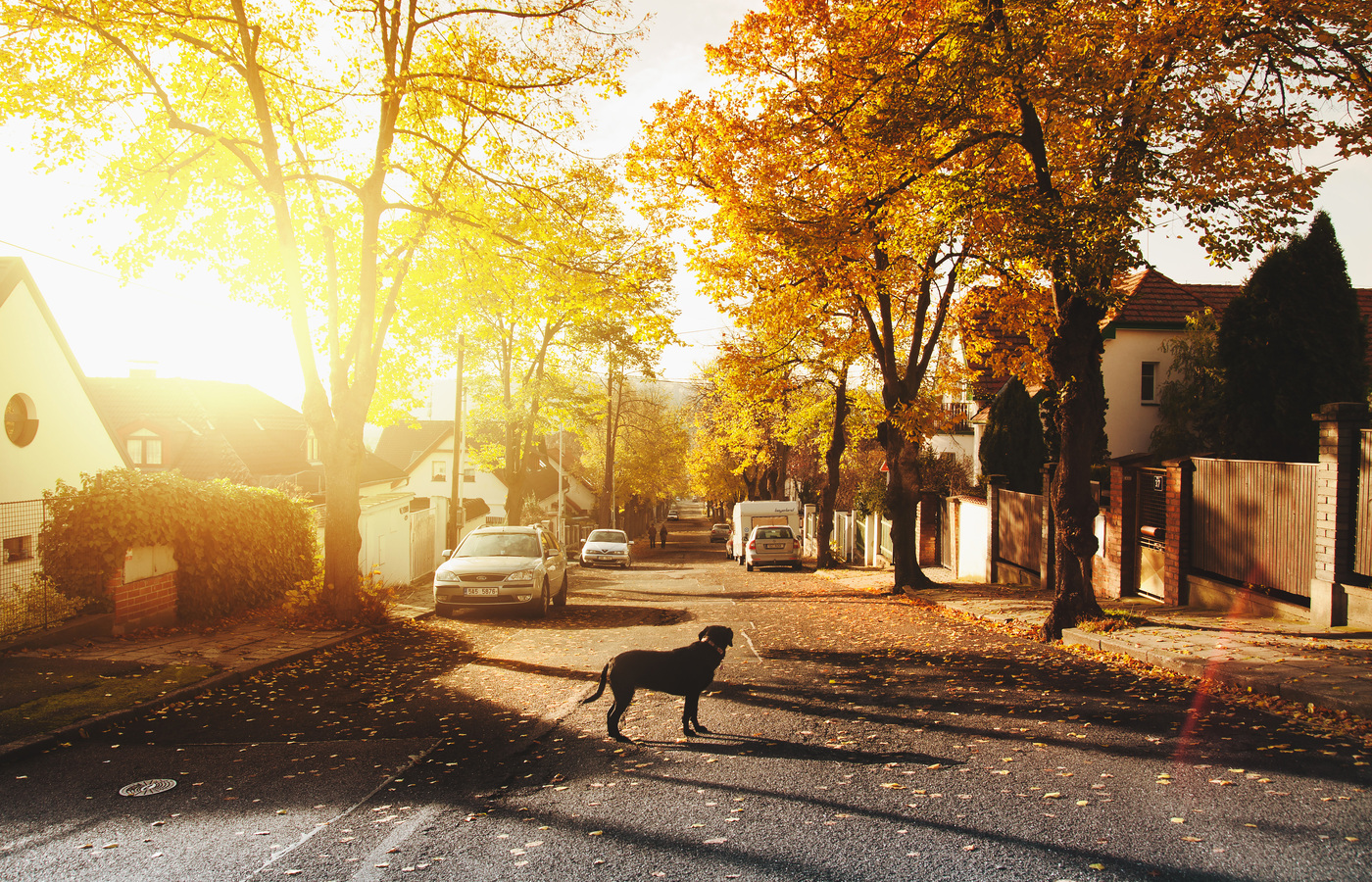 dog-on-concrete-road-homes-trees-sunlights-4k-i6.jpg