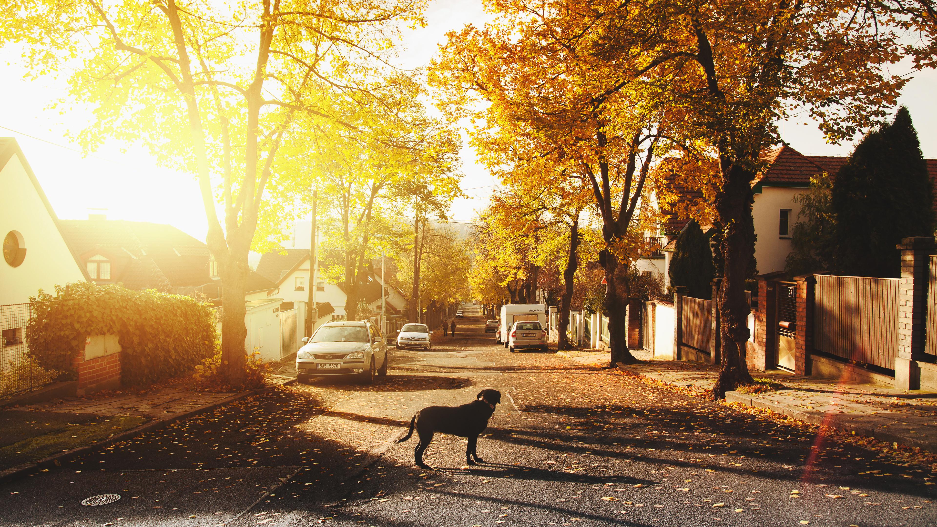 dog-on-concrete-road-homes-trees-sunlights-4k-i6.jpg