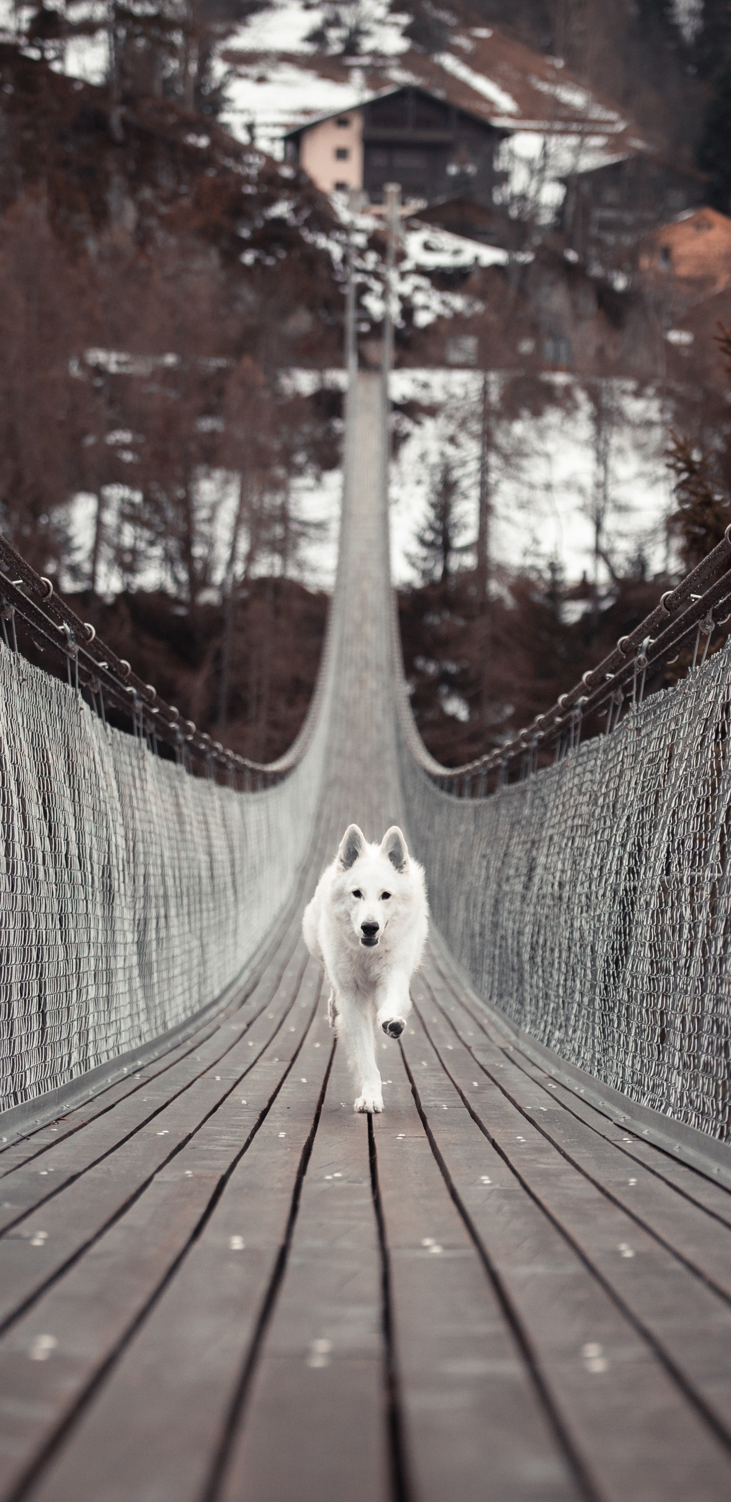 dog-running-bridge-5k-bx.jpg
