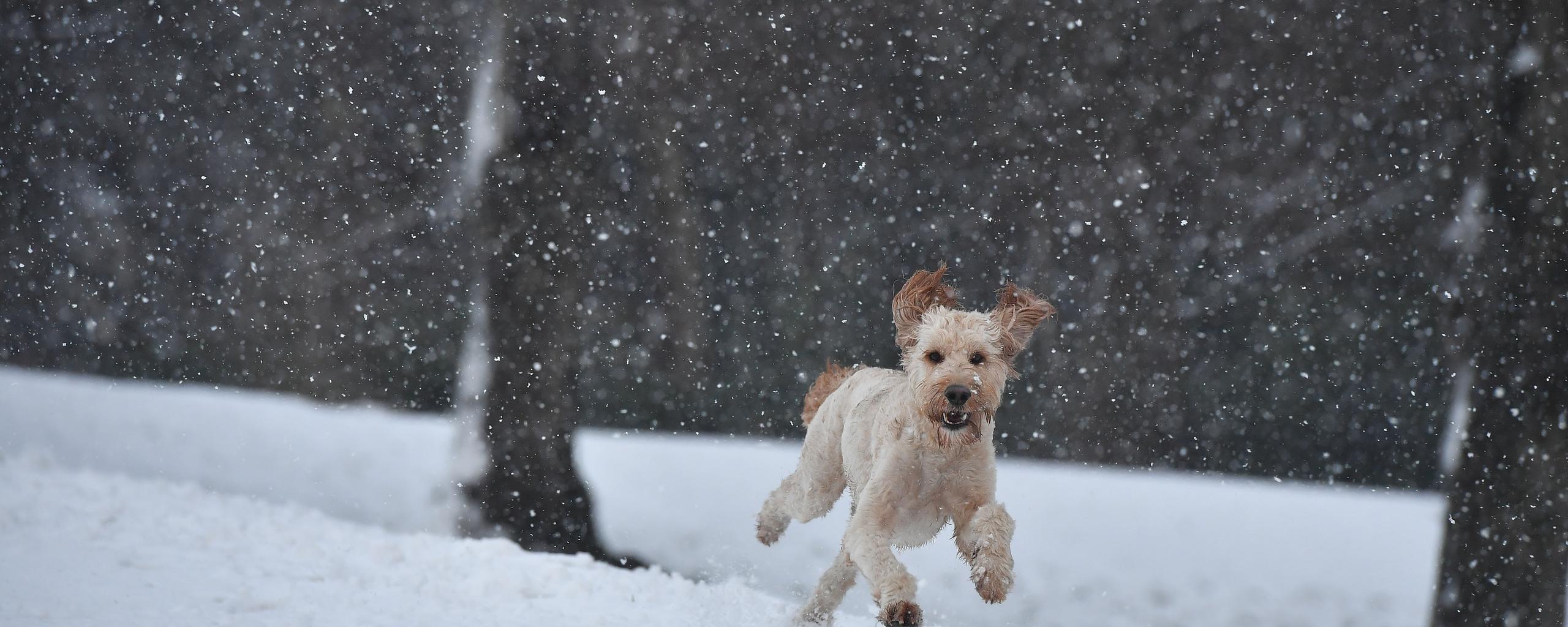 dog-running-in-a-snow-oz.jpg
