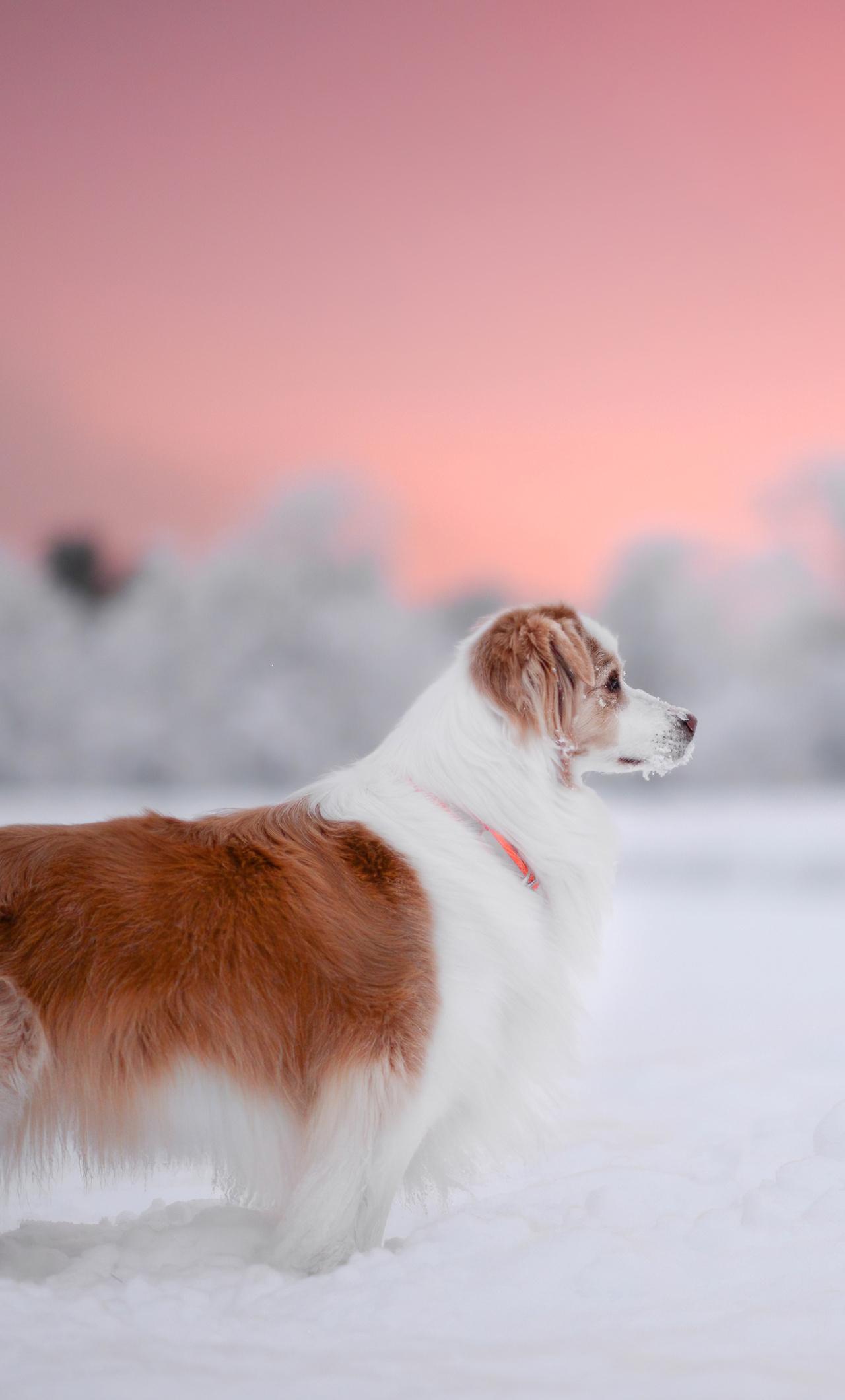 dog-snow-4k-r8.jpg