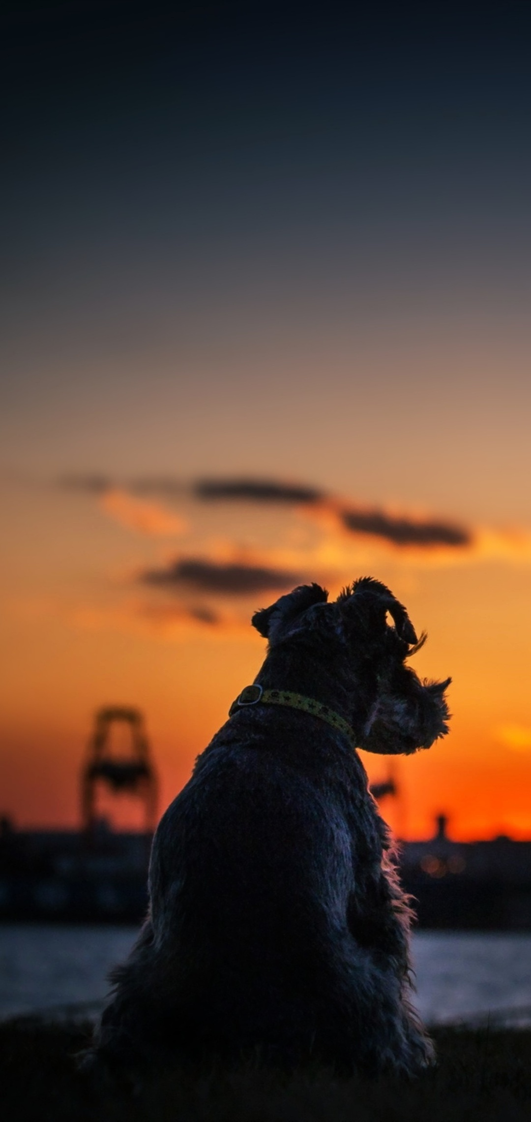 dog-sunset-silhouette-4k-ju.jpg