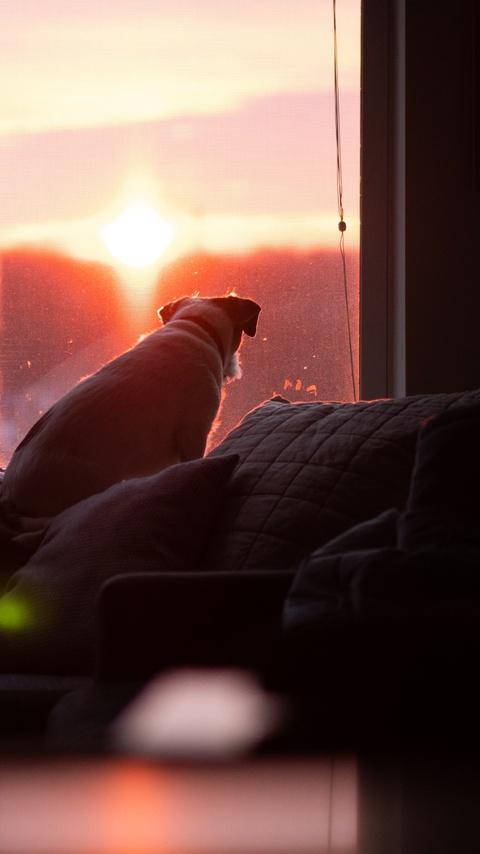 dog-watching-sunset-5k-yh.jpg