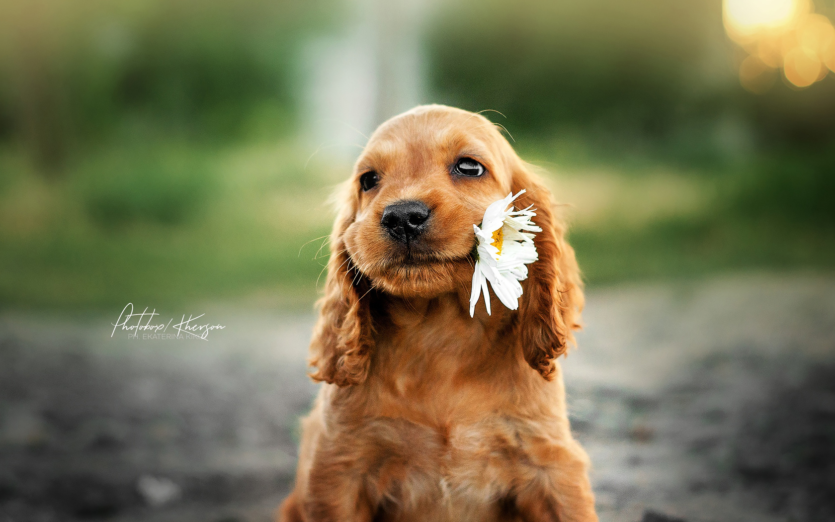 dog-with-flower-in-mouth-sz.jpg