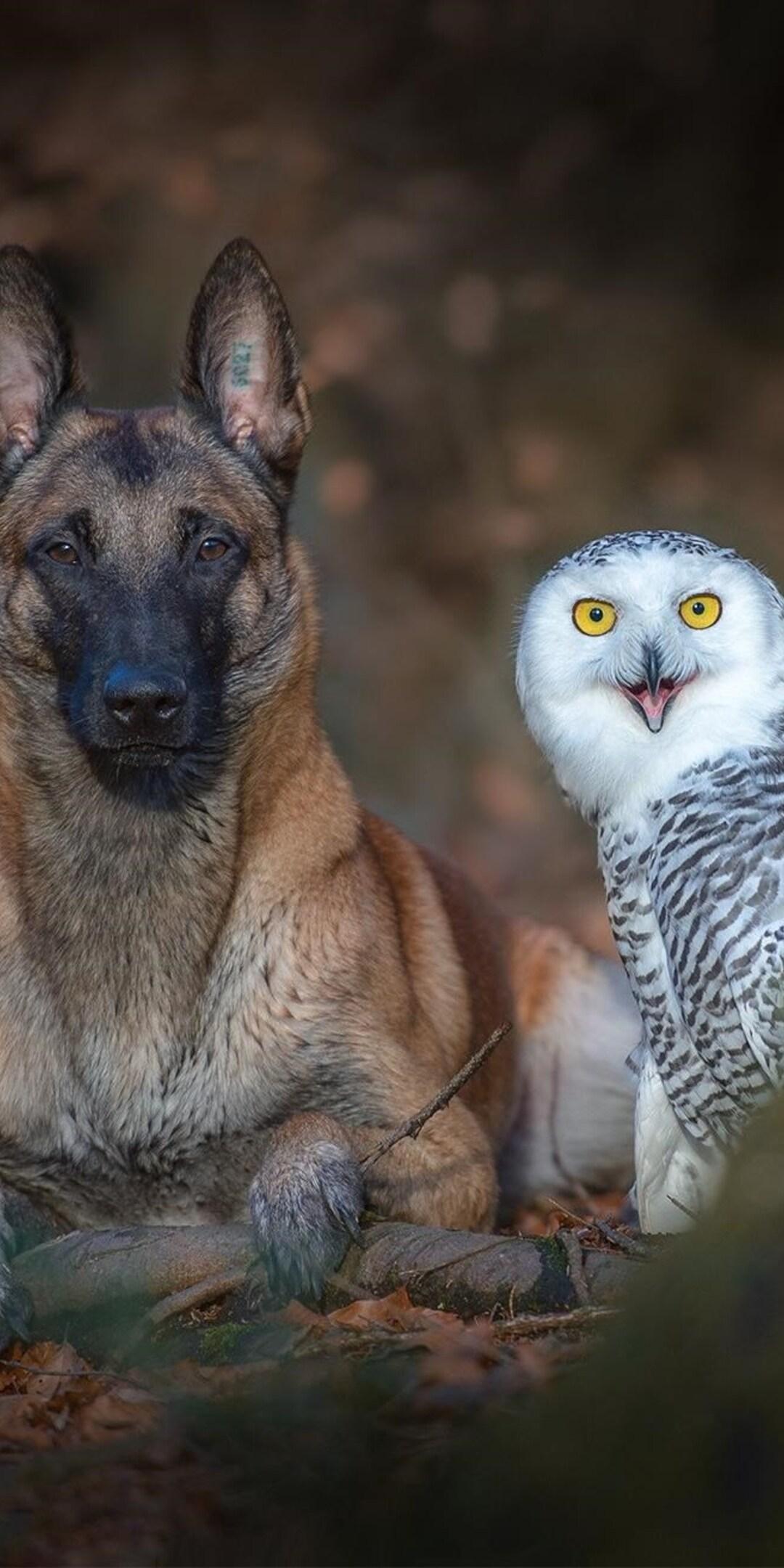 dog-with-owl.jpg