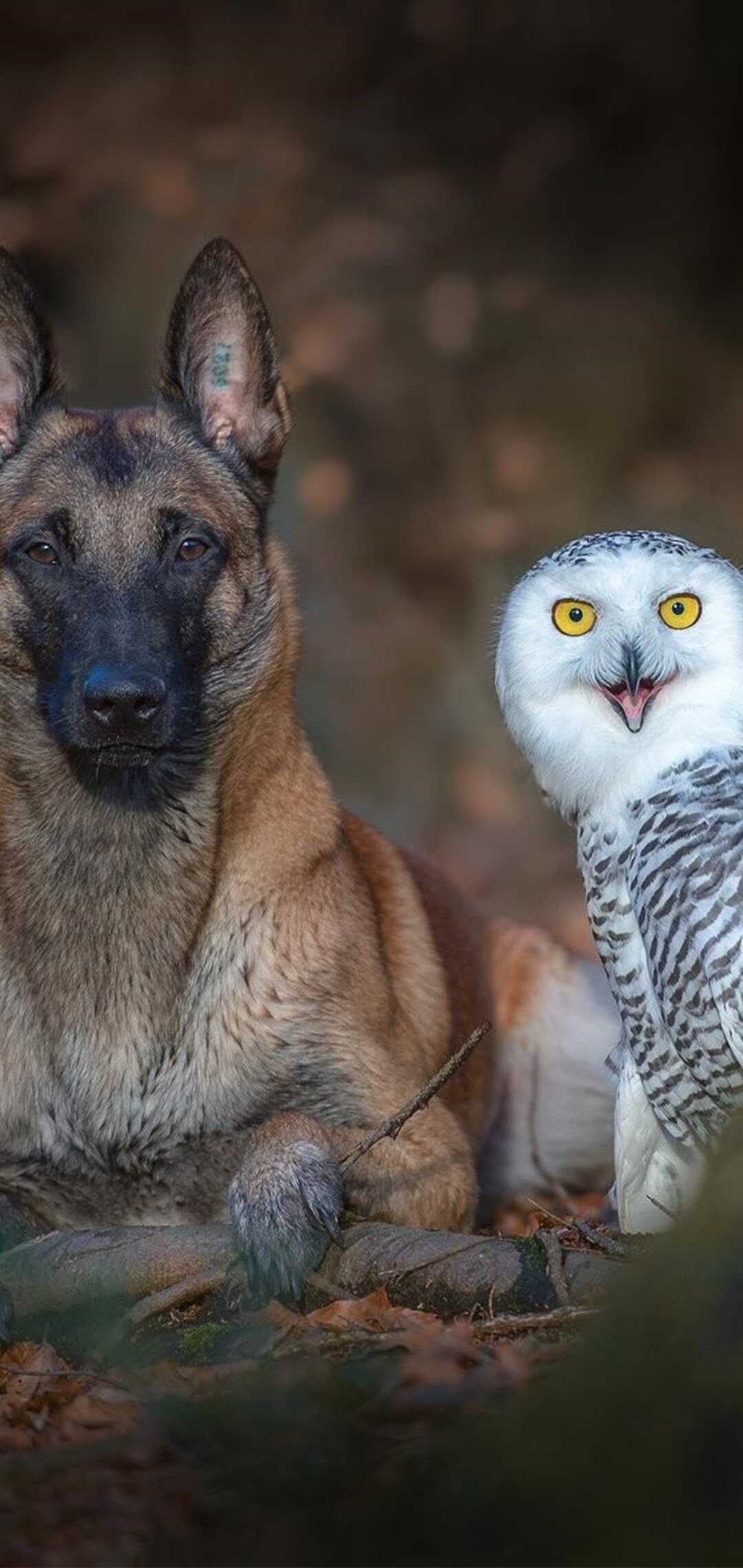 dog-with-owl.jpg