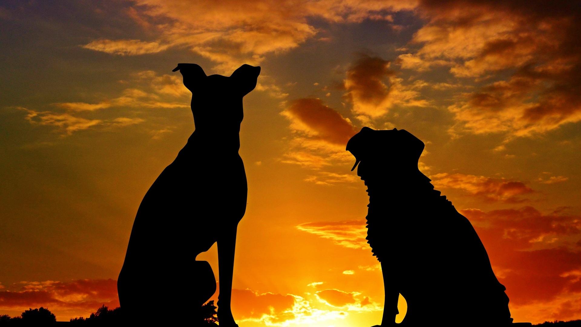 dogs-silhouette-4k-n1.jpg