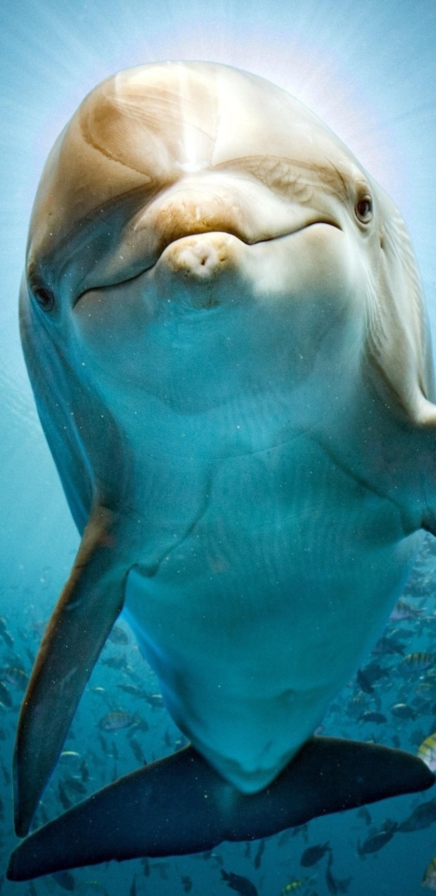 1440x2960 Dolphin Hd Samsung Galaxy Note 9 8 S9 S8 S8 Qhd Hd 4k