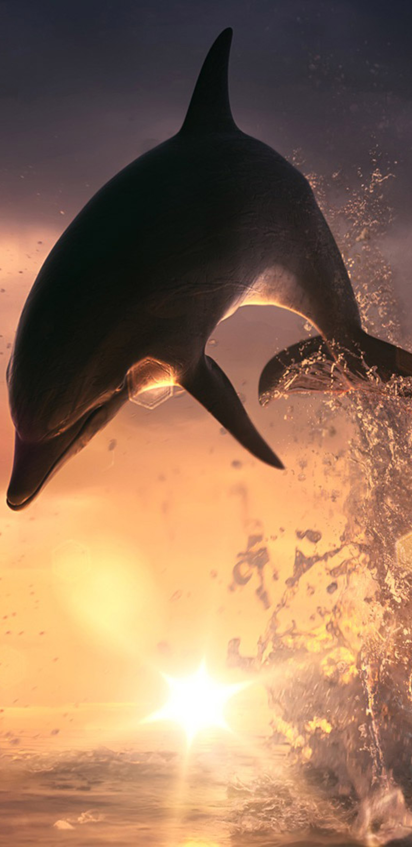 1440x2960 Dolphin Jump Out Of Ocean Samsung Galaxy Note 9 8 S9 S8