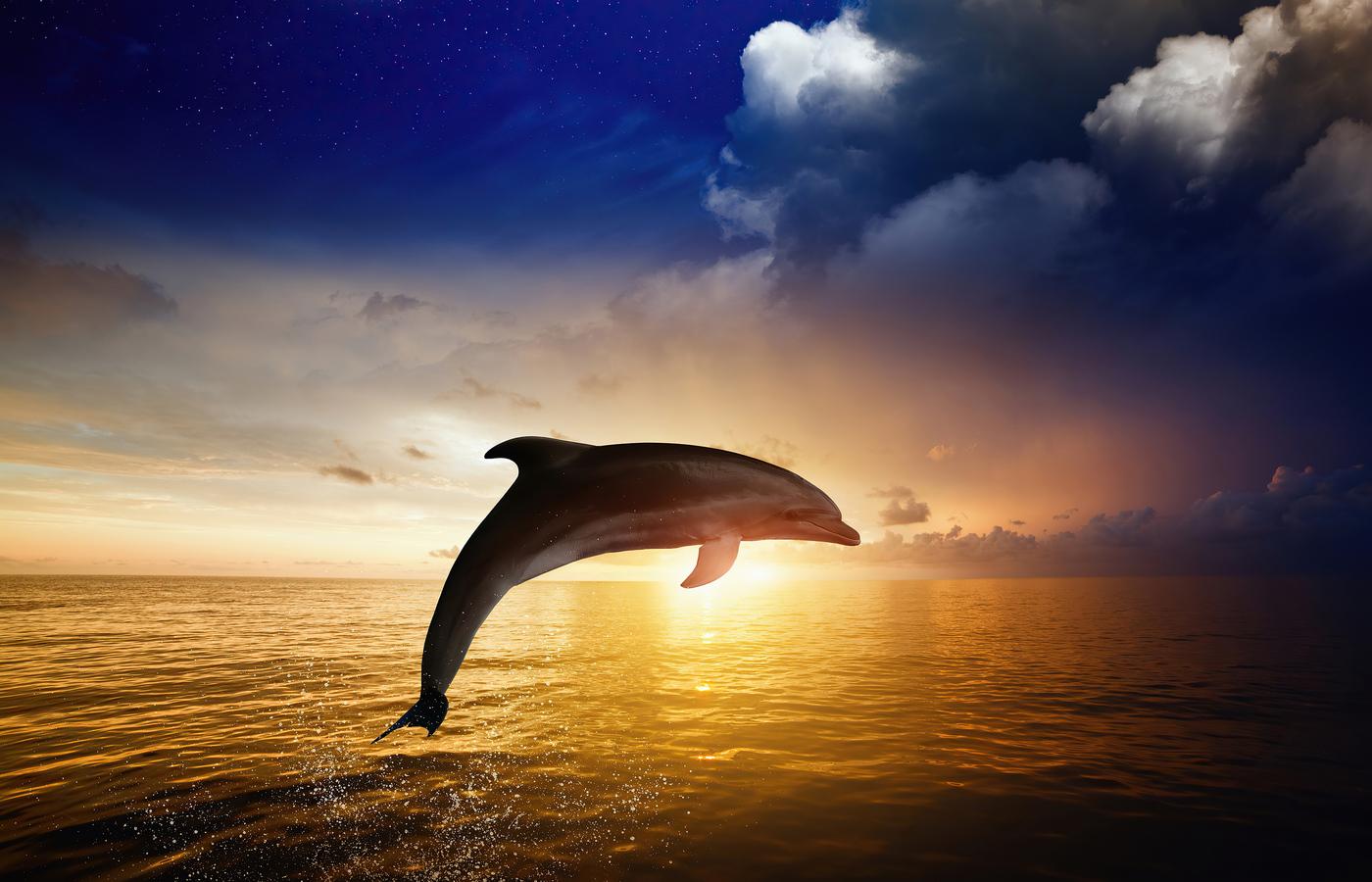 dolphin-jumping-kp.jpg