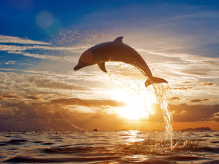 dolphin-jumping-out-of-water-3u.jpg