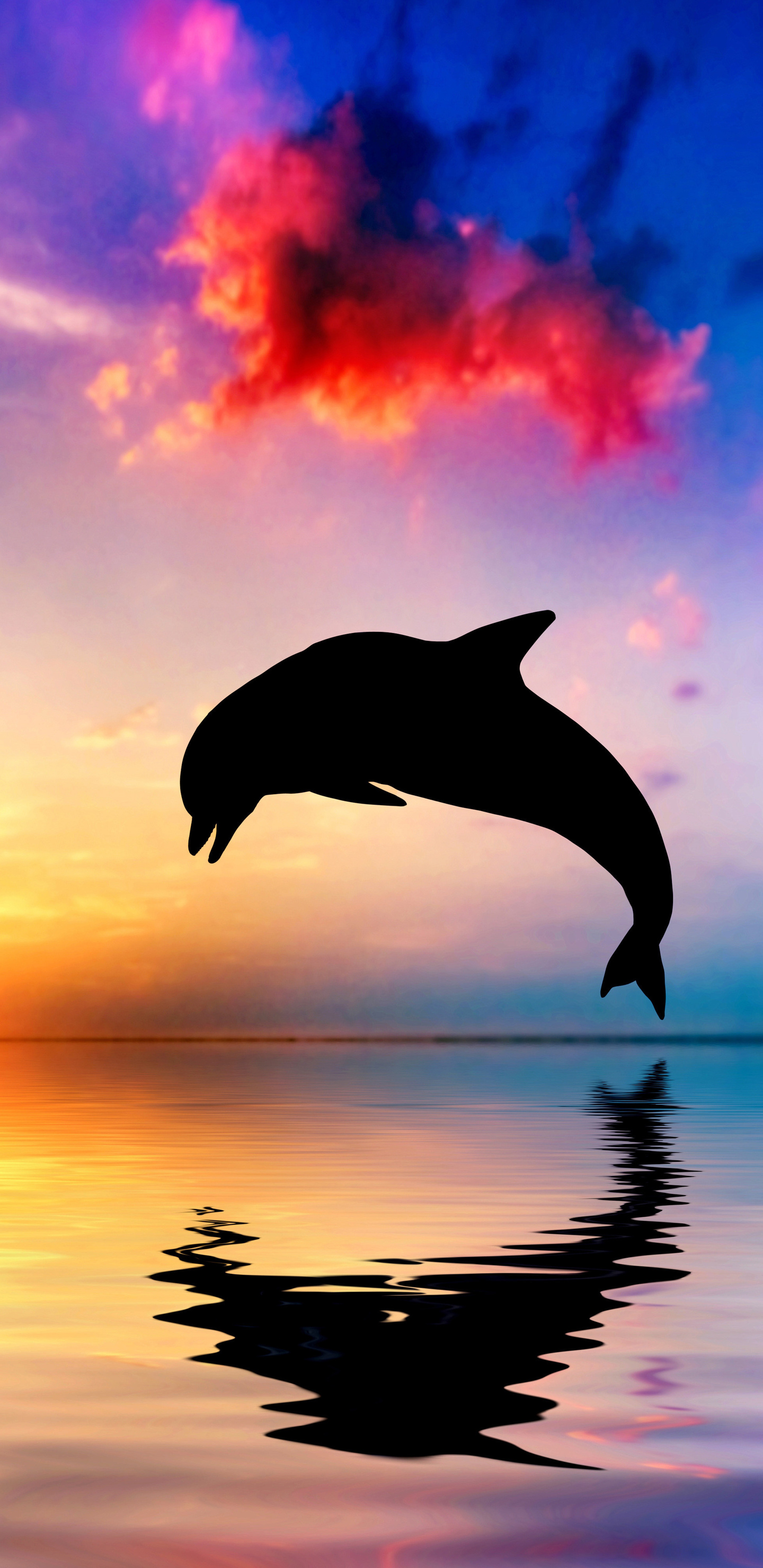 1440x2960 Dolphin Jumping Out Of Water Sunset View 4k Samsung Galaxy