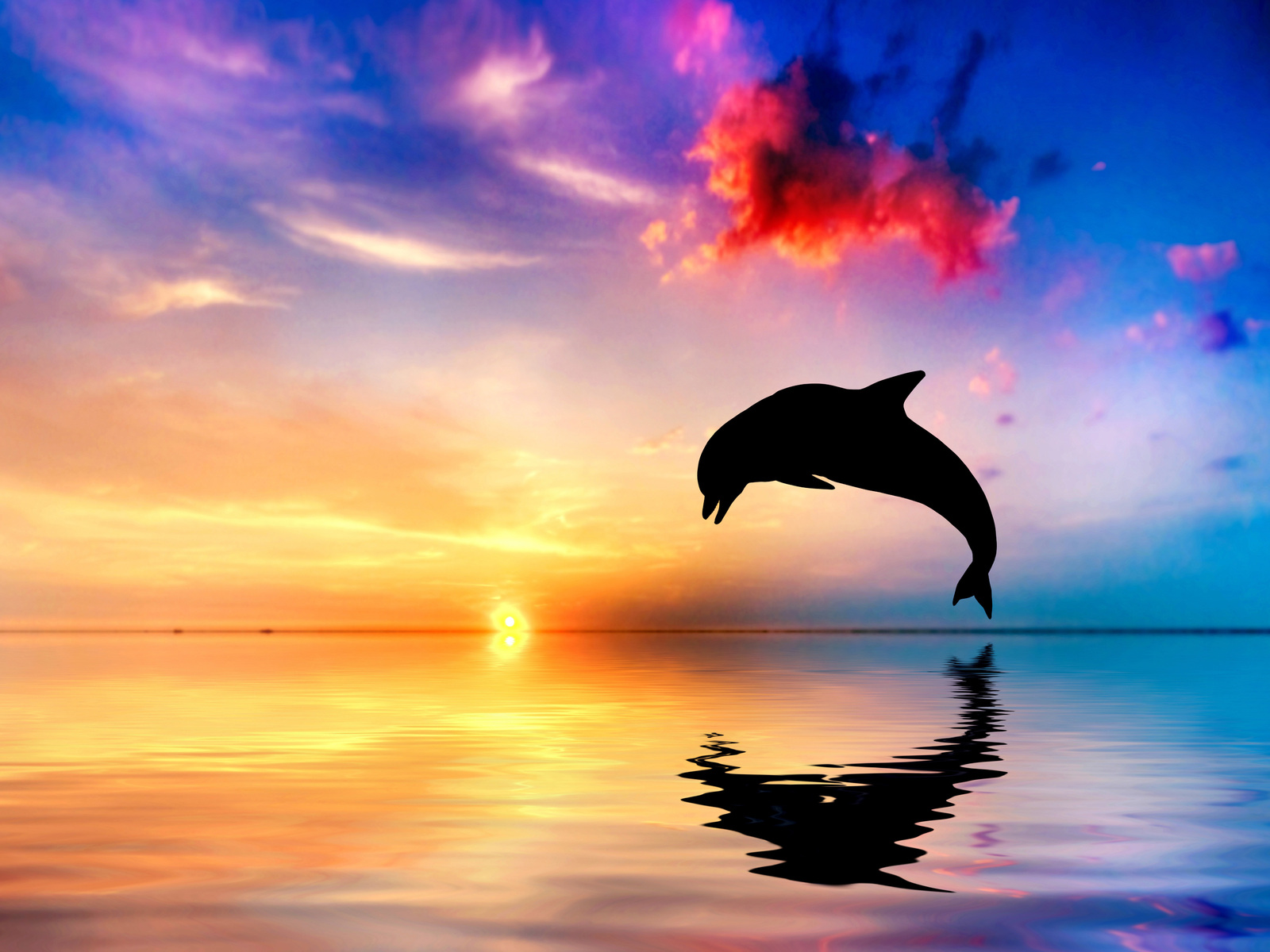 dolphin-jumping-out-of-water-sunset-view-4k-b3.jpg