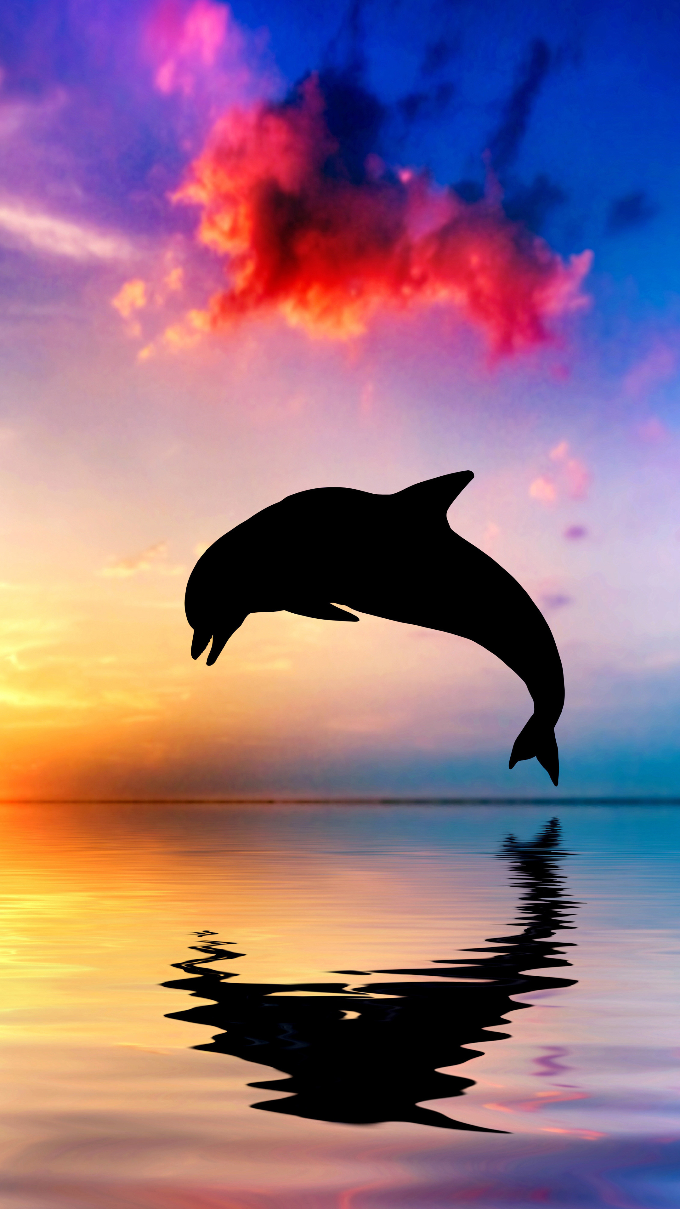 2160x3840 Dolphin Jumping Out Of Water Sunset View 4k Sony ...