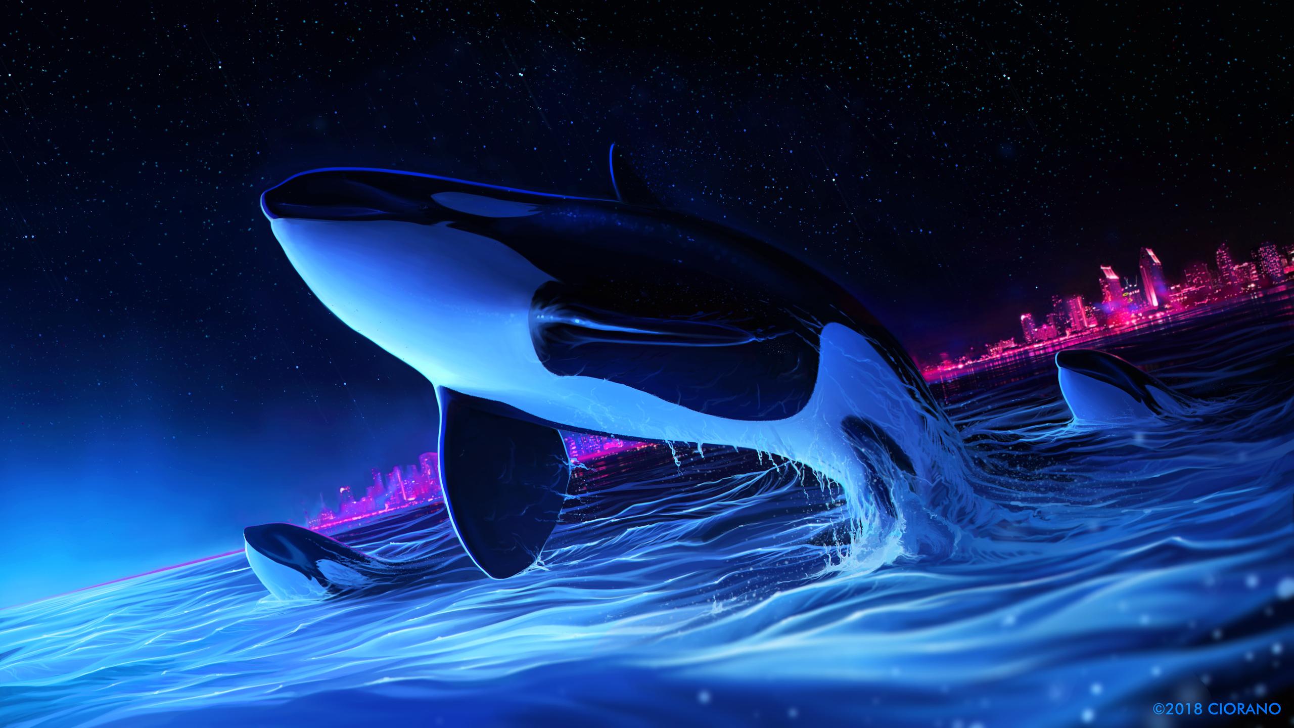 2560x1440 Dolphin Night Orca Whale Digital Art 1440p