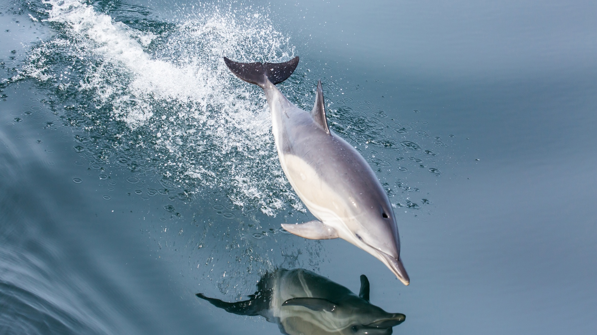 1920x1080 Dolphin Laptop Full Hd 1080p Hd 4k Wallpapers Images