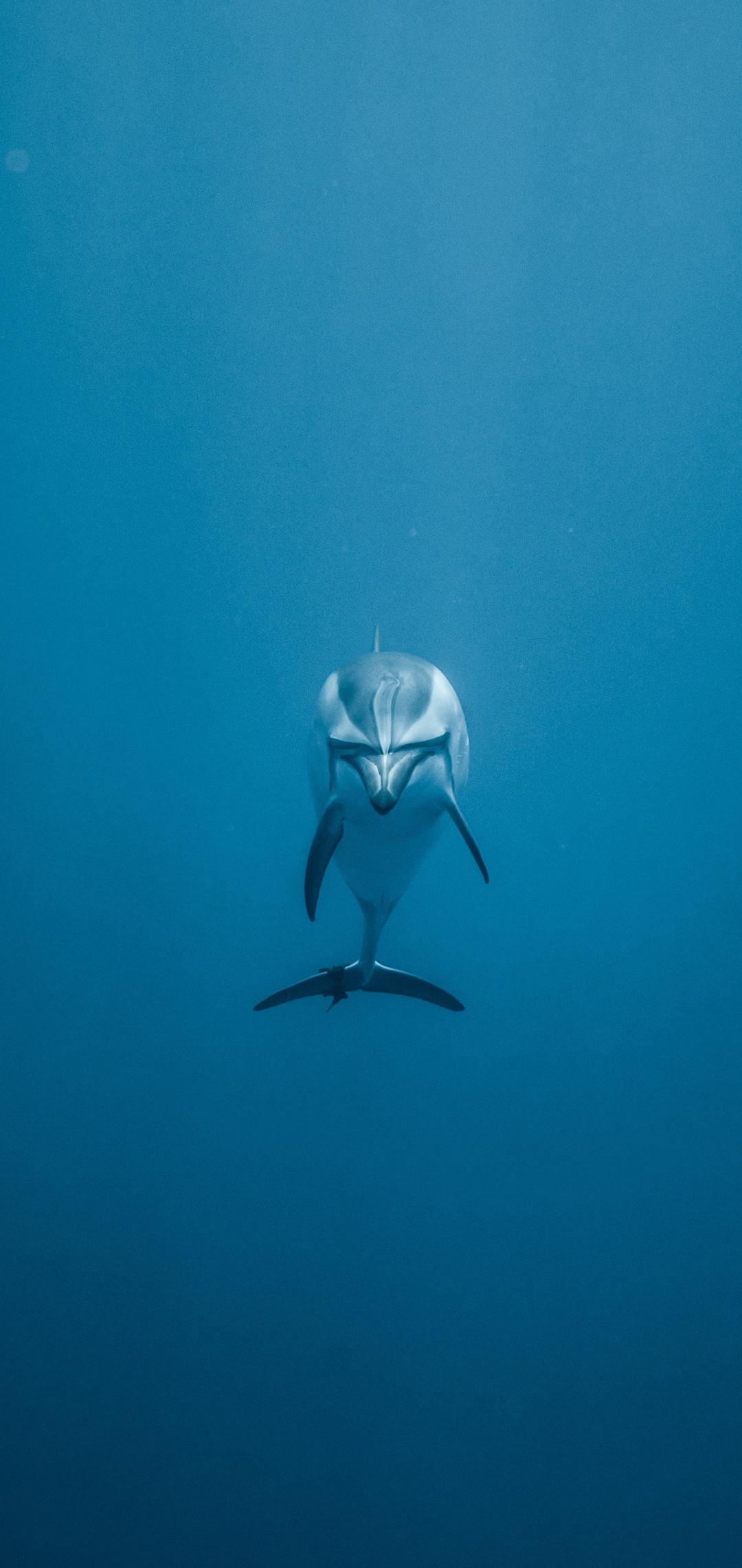 dolphin-underwater-5k-ta.jpg