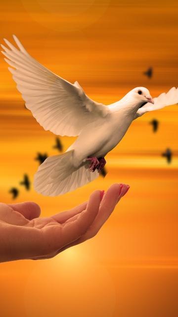 dove-bird-flying-away-rc.jpg