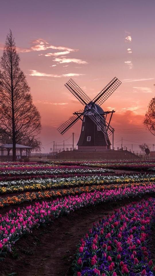dream-windmill-field-6o.jpg