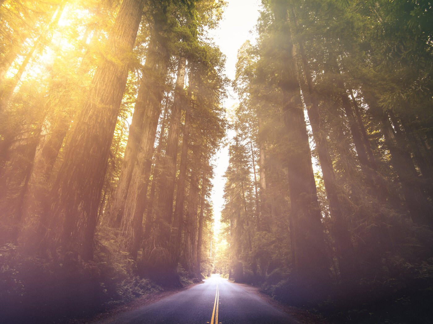 driving-through-red-woods-5k-by.jpg