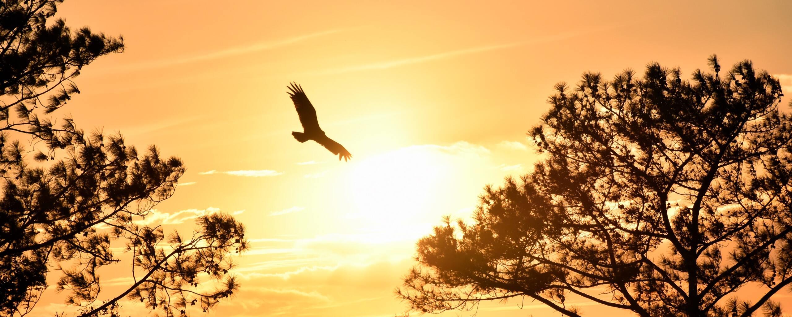 eagle-flying-towards-sunset-5k-ul.jpg