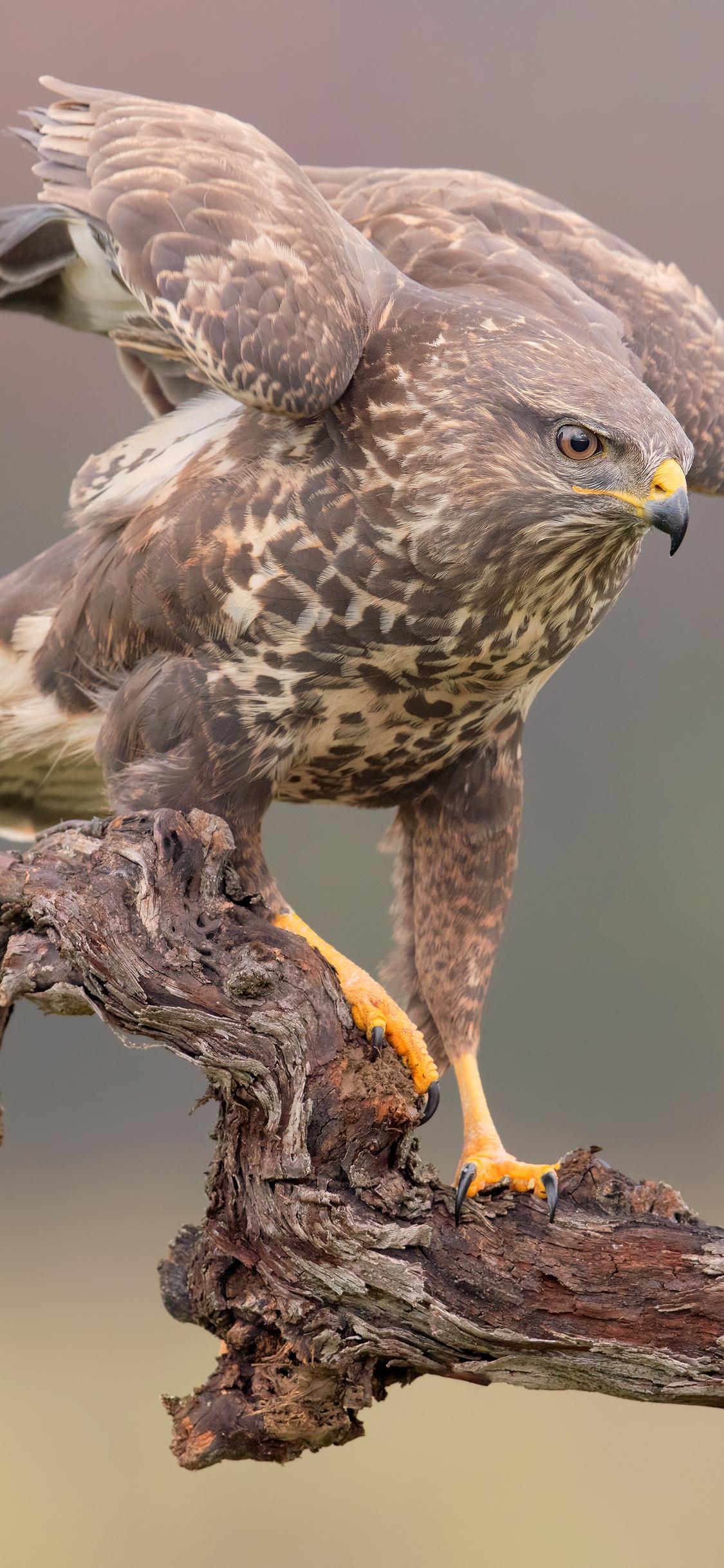 eagle-hawk-5k-wn.jpg