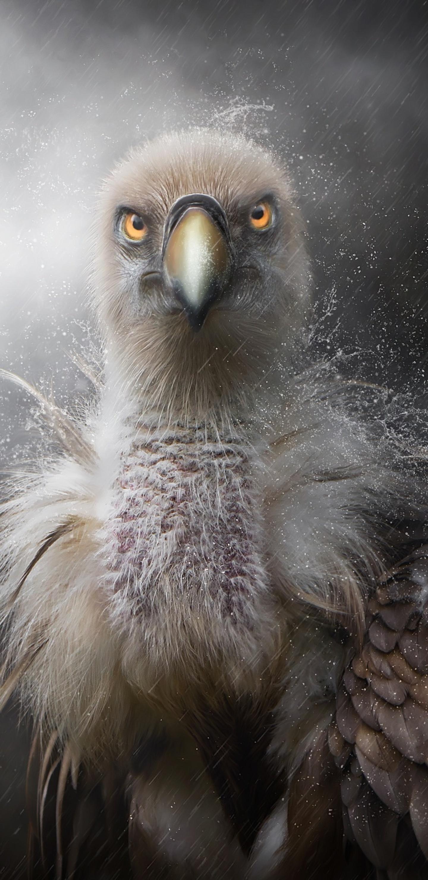 eagle-in-rain-50.jpg