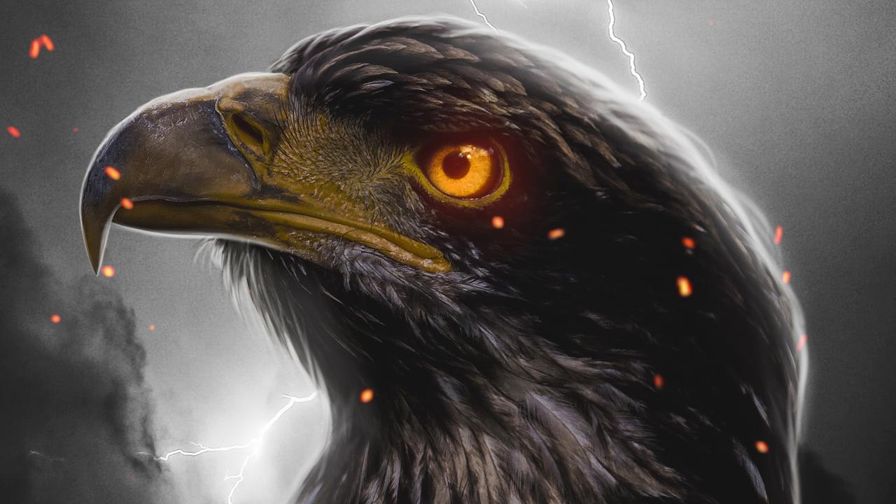 eagle-orange-eye-4k-03.jpg