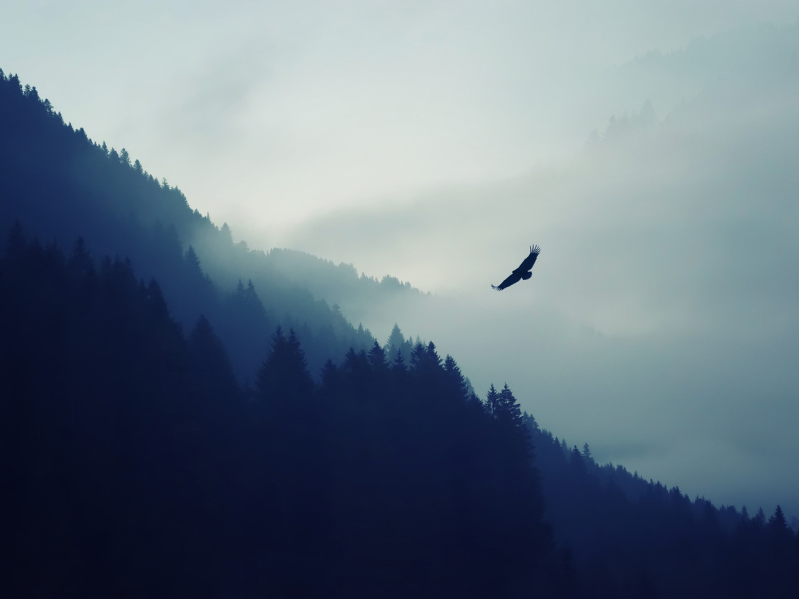 eagle-over-the-mountain-il.jpg