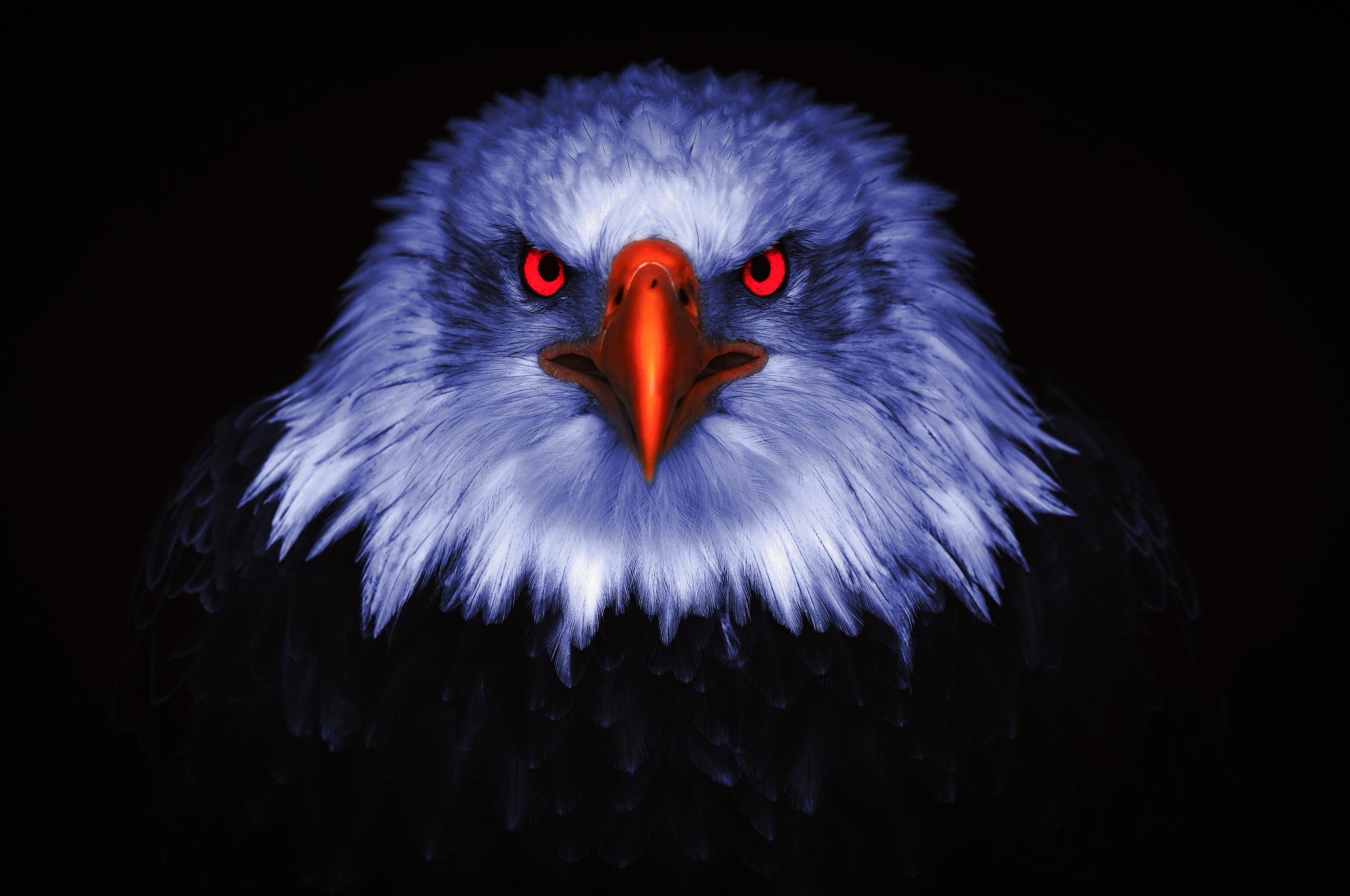 eagle-raptor-eyes-8k-xr.jpg