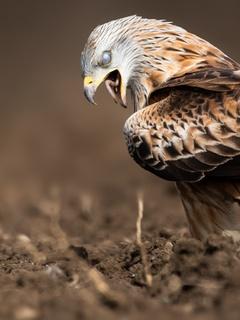 eagle-swallow-a-worm-4k-20.jpg
