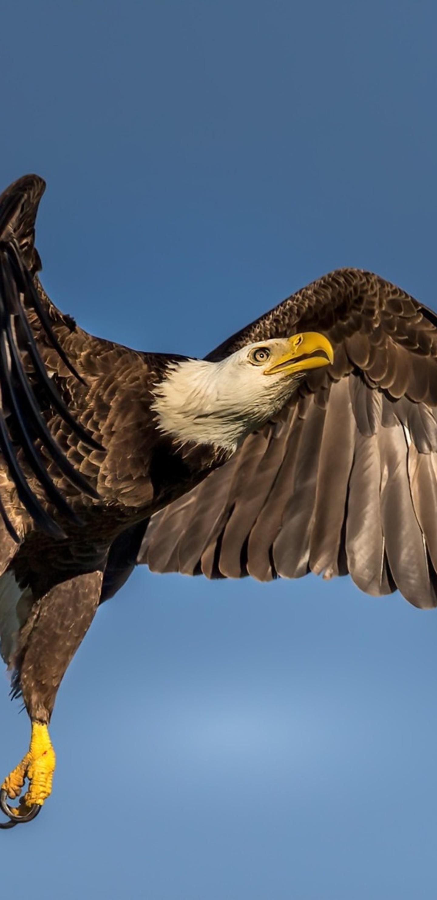 eagle-wings-open-3i.jpg