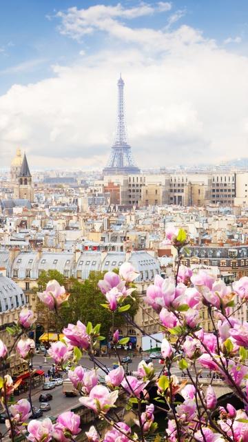 eiffel-tower-france-flowers-beautiful-4k-mg.jpg