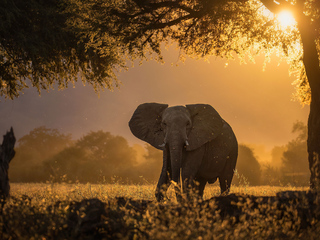 elephant-forest-sunbeams-morning-4k-5j.jpg