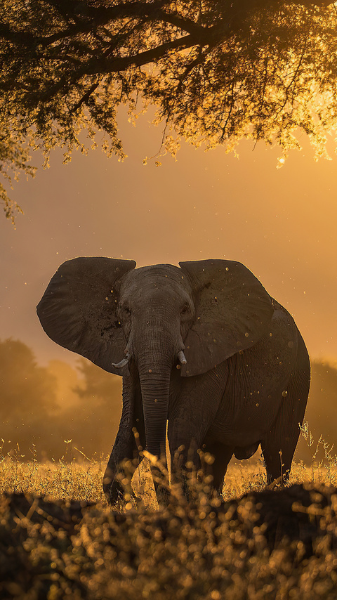 elephant-forest-sunbeams-morning-4k-5j.jpg
