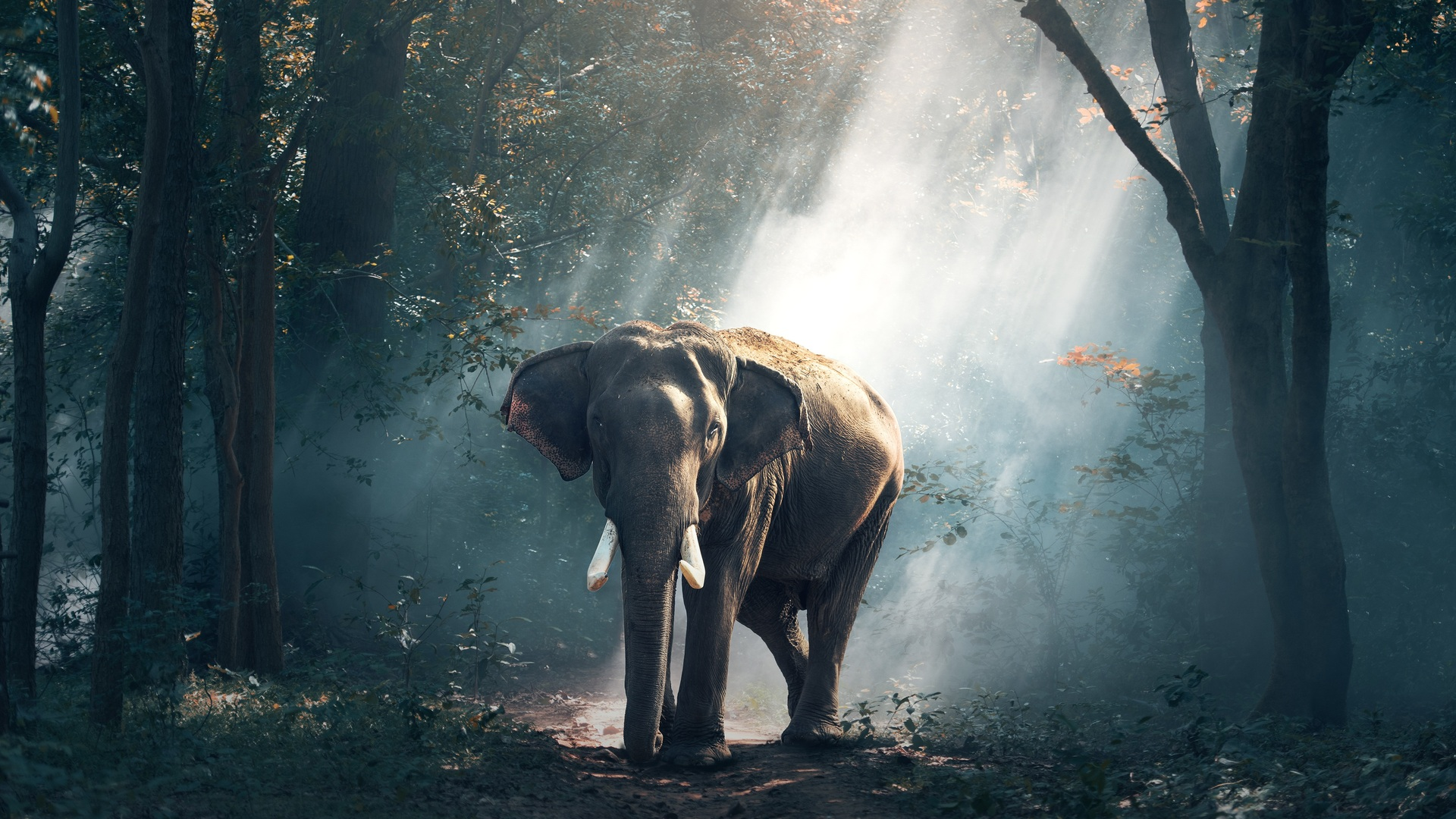 1920x1080 elephant laptop full hd 1080p hd 4k wallpapers, images
