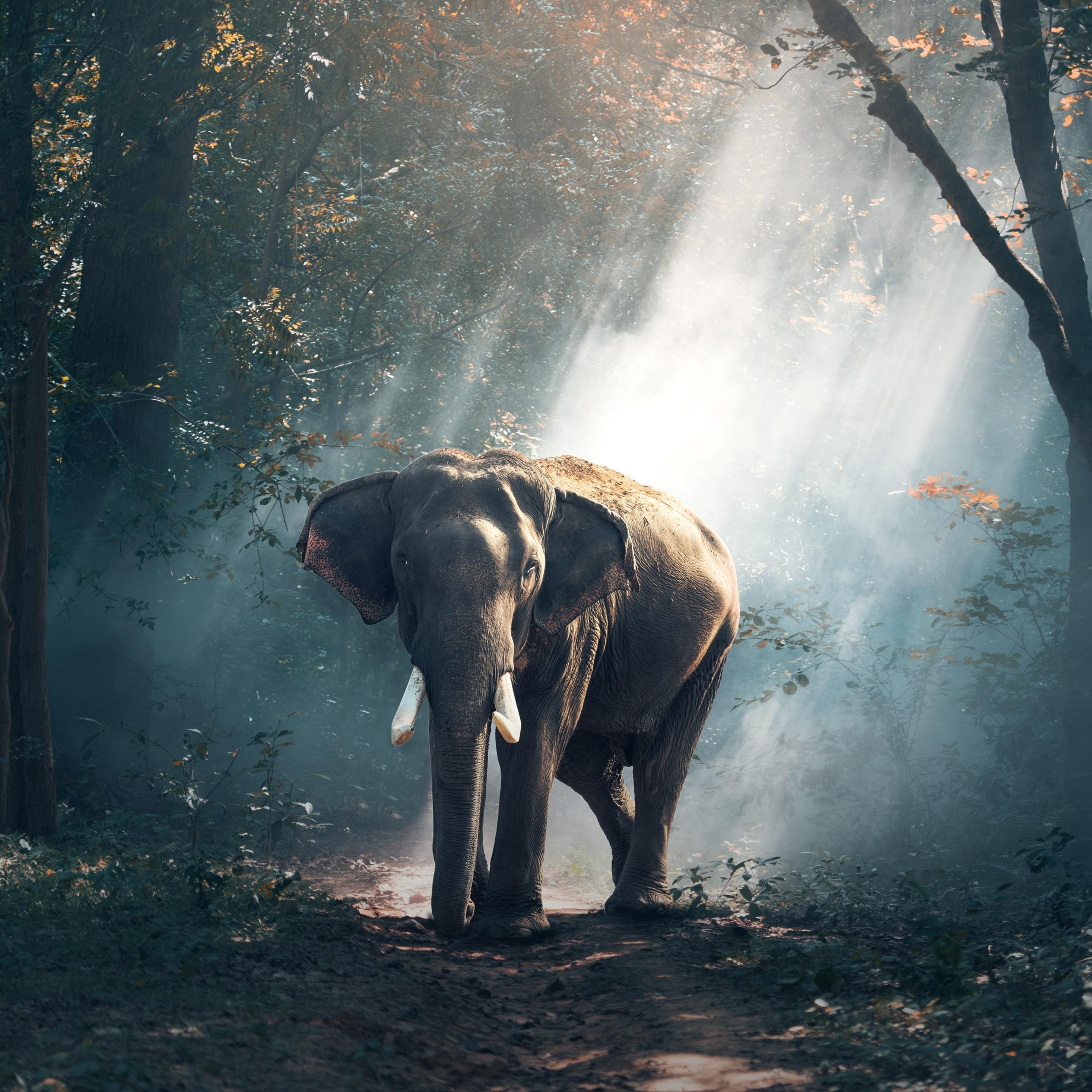 13+ Ipad Wallpaper Elephant Images