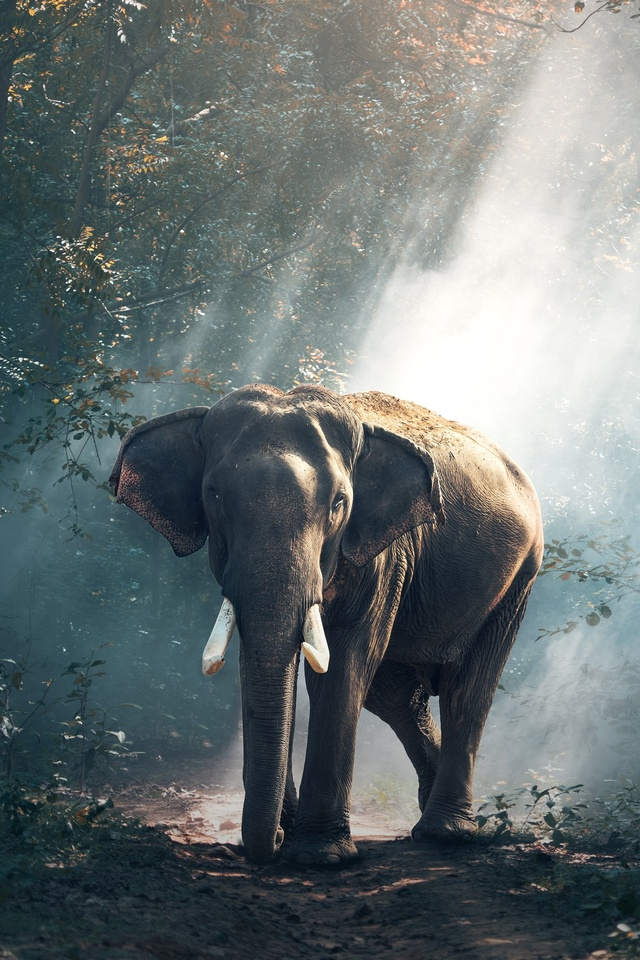 elephant-s2.jpg