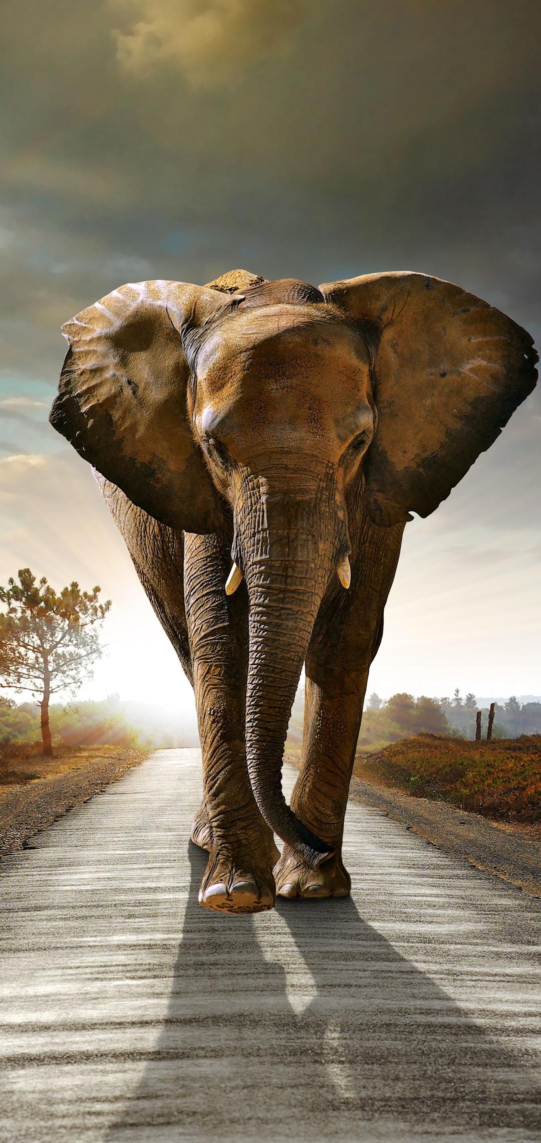 elephant-walking-on-the-road-hdr-8k-z1.jpg