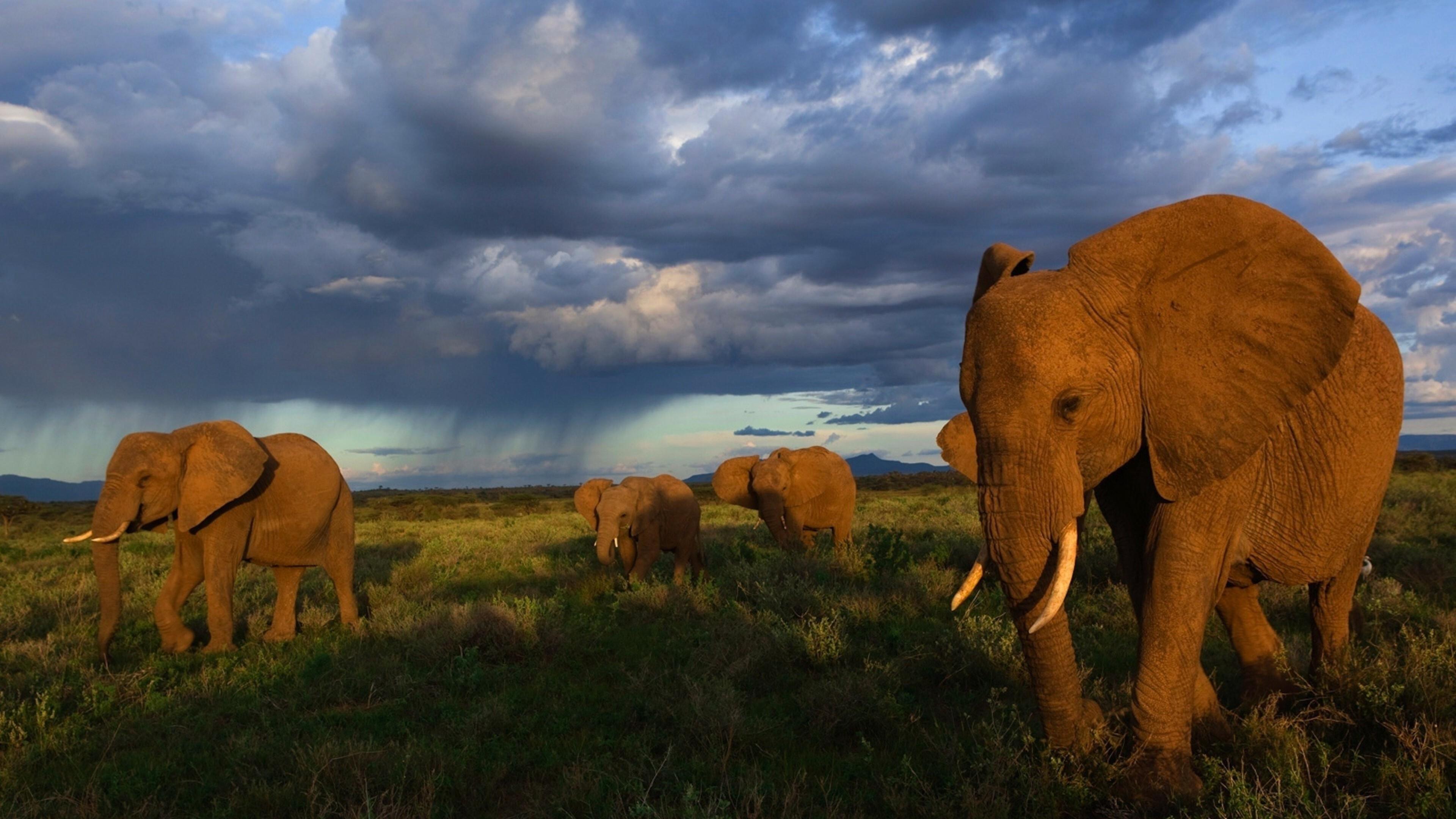Слоны в грозу подборки