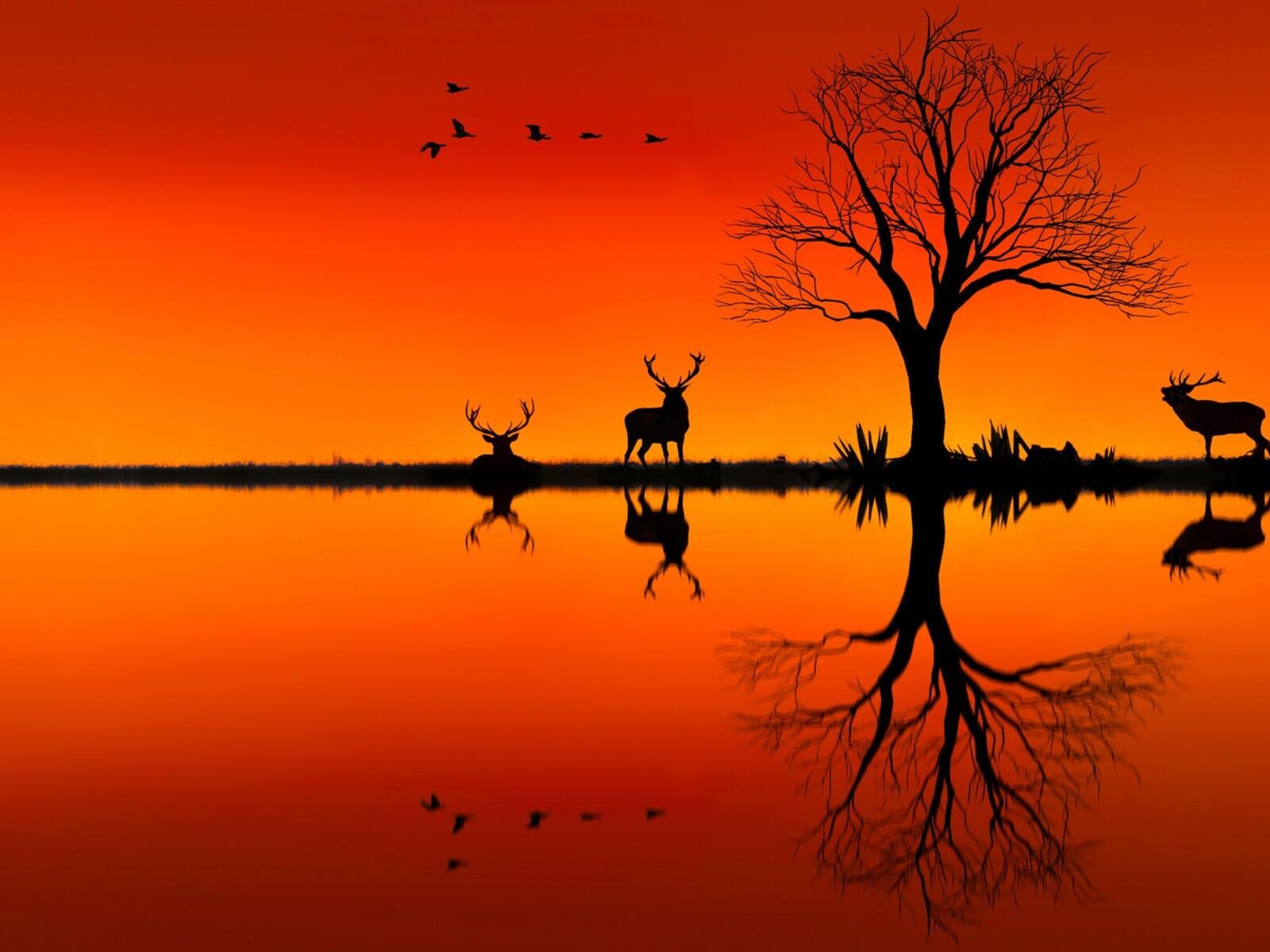 elk-on-horizon-sunset-evening-z6.jpg