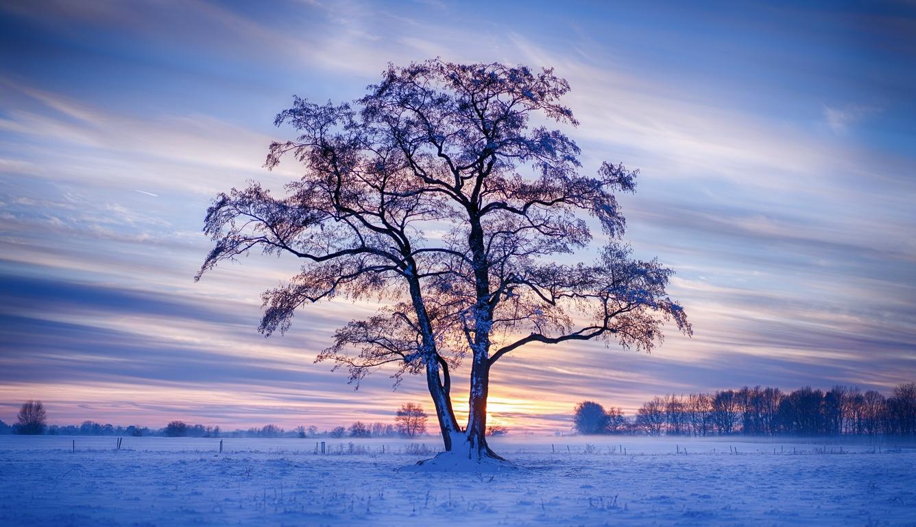 evening-winter-trees-snow-5k-4i.jpg