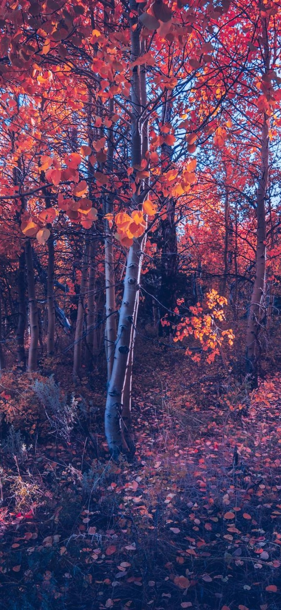 1125x2436 Fall Of Autumn Trees Iphone Xs Iphone 10 Iphone X